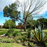 jardin_16