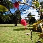 jardin_38